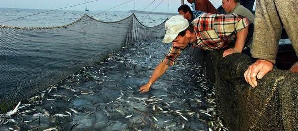 http://www.ansa.it/mare/notizie/rubriche/ambienteepesca/2015/09/29/pescatori-ed-esperti-a-bordo-per-studiare-sicurezza-con-reti_5f3bc9aa-dd21-4054-962a-e3938174a18c.html