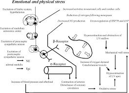 Dallo stress la malattia del cuore infranto la for Vasi coronarici
